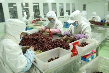 枣夹核桃生产环境